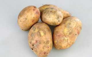"""Картофель """"Славянка"""": описание сорта, фото, отзывы"""