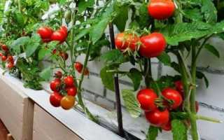 Томаты Балконное чудо: описание сорта, как выращивать, отзывы