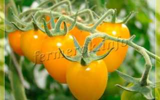 Какие бывают сорта желтых помидор?