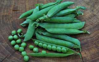 Посевной горох – разные виды и сорта бобовых