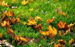 Уход за газоном осенью и подготовка его к зиме