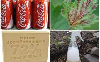 Кока-кола против тли и муравьев