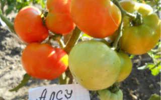 """Томат """"Алсу"""": характеристика и описание сорта, урожайность, фото, отзывы"""