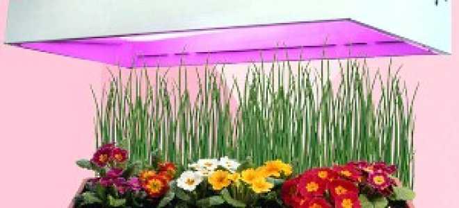 Подсветка для рассады растений в домашних условиях