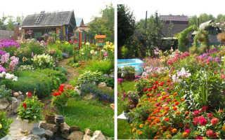 Неприхотливые и долгоцветущие цветы многолетники для сада