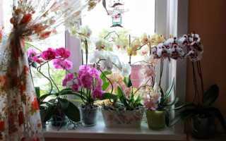 Как пересадить орхидею в домашних условиях: пошаговая инструкция + видео