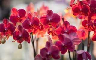 Вредители орхидей и борьба с ними + фото
