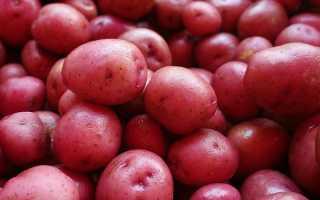 """Картофель """"Любава"""": описание сорта, фото, отзывы"""