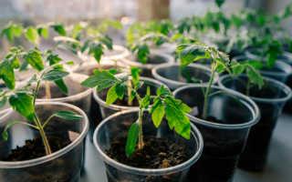 Когда и чем лучше подкормить рассаду помидор
