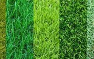 Газонная трава: как выбрать лучшие семена