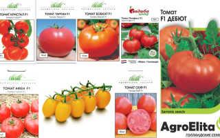 Семена томатов голландской селекции для теплиц