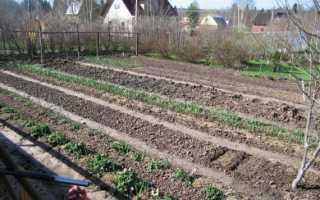Как правильно посадить огурцы в открытом грунте