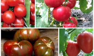 Выбираем урожайные сорта томатов на 2020 год для теплиц