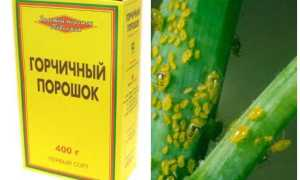 Уксус и горчица от тли: что поможет избавиться от вредителей