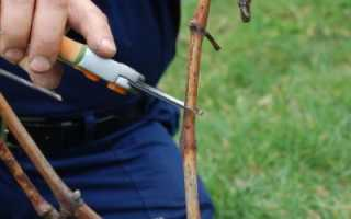 Как обрезать виноград осенью: схема в картинках, пошаговая инструкция