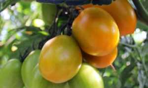 Уход за растением: чем можно опрыскивать помидоры
