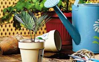 Как ухаживать за комнатными растениями – основные правила