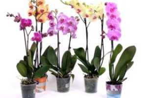 Орхидея после покупки – уход в домашних условиях