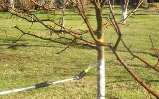 Чем обработать от вредителей яблоню после цветения: народные средства и химия