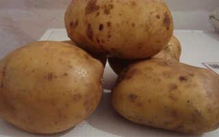 """Картофель """"Невский"""": описание и характеристика сорта, фото, отзывы"""