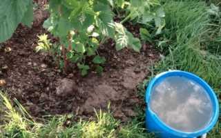 Подкормка малины осенью – чем удобрять ягоду на зиму