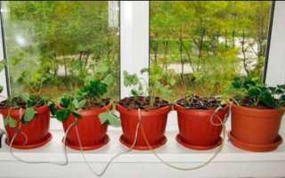 Как вырастить гидропонику в домашних условиях