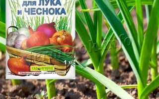 Чем подкормить чеснок весной, посаженный под зиму