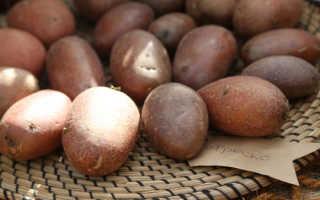 Уборка картофеля с умом: сроки, хранение, семенные клубни