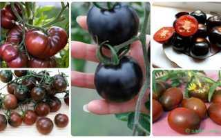 Лучшие сорта черных томатов