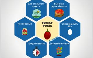 "Томат ""Рома"": характеристика и описание сорта, отзывы, фото"