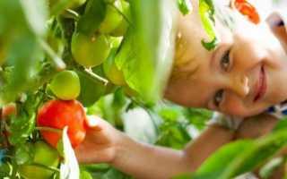 Сорта розовых помидор – 10 лучших видов