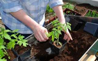 Правила выращивания рассады томатов в домашних условиях