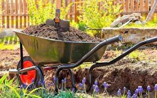 Чем подкормить баклажаны для роста после высадки в грунт: народные средства