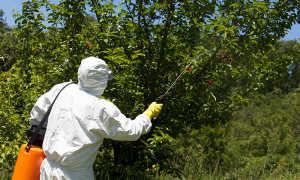 """Инсектицид """"Декстер"""": инструкция по применению"""