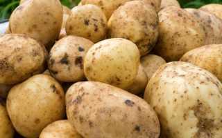 """Картофель """"Санте"""": описание сорта, фото, отзывы"""