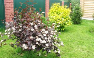 Плодовые деревья и кустарники для садового участка: фото и названия