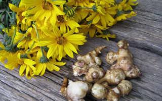 Топинамбур: выращивание, размножение, посадка и уход на даче
