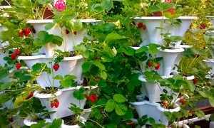 Вертикальные грядки для клубники на садовом участке