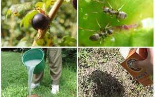 Народные средства борьбы с тлей на садовом участке