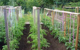 Как правильно высаживать рассаду помидор в открытый грунт?