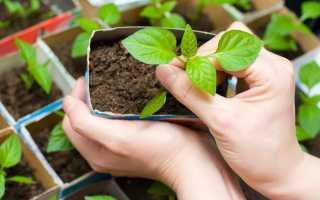 Посадки томатов: вредители и борьба с ними
