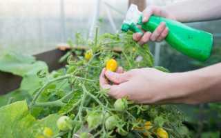 Опрыскивание помидоров сывороткой с йодом от фитофторы