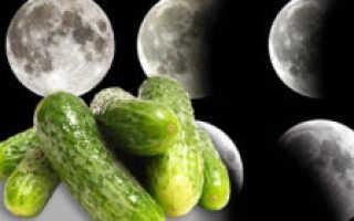 Благоприятные дни для посадки огурцов в мае и июне по лунному календарю