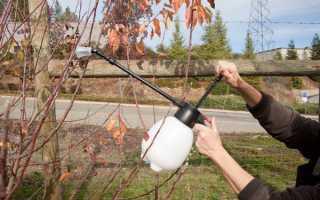Опрыскивание плодовых деревьев осенью