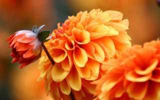Осенние цветы в саду: фото и названия