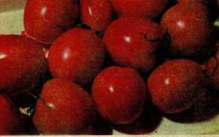 """Томат """"Де Барао"""": характеристика и описание сорта, выращивание рассады, фото"""
