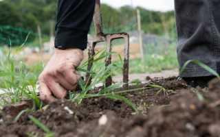 Как бороться с сорняками на дачном участке: народные способы и химия