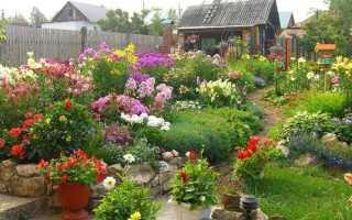 Многолетние цветы для сада: фото и названия