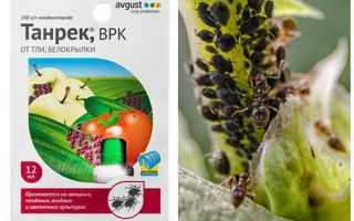 Танрек от колорадского жука, тли, белокрылки – инструкция по применению, отзывы