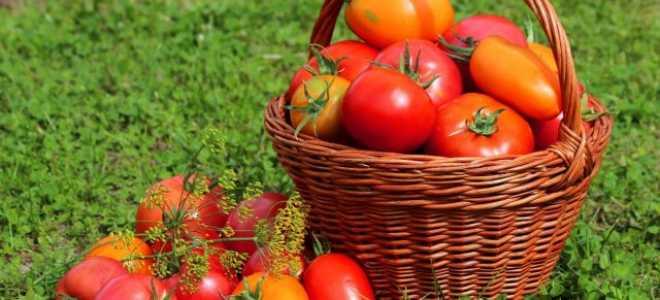 Азотно-фосфорно-калийное удобрение: применение на огороде